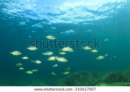 School of fish in ocean - stock photo