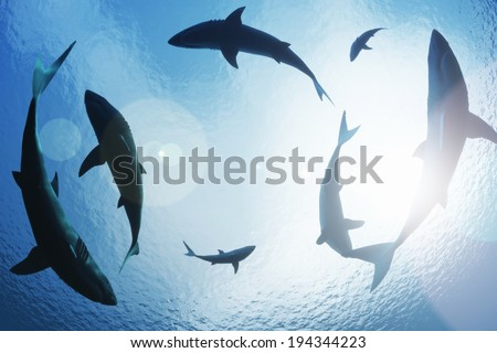 School of sharks circling from above - stock photo