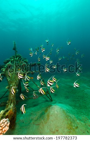 Schooling bannerfish and the aquatic life in the Red Sea - stock photo