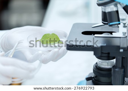 science, chemistry, biology and people concept - close up of scientist hand with microscope and green leaf making research in clinical laboratory - stock photo