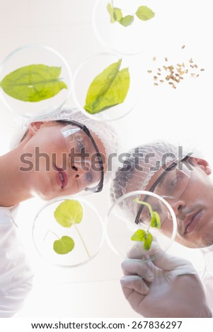 Scientists examining leafs in petri dish in the laboratory - stock photo