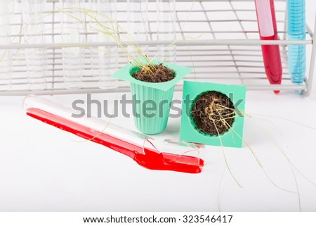 Scientists, research of rice, Rice bran oil in laboratory. Not a success.  - stock photo