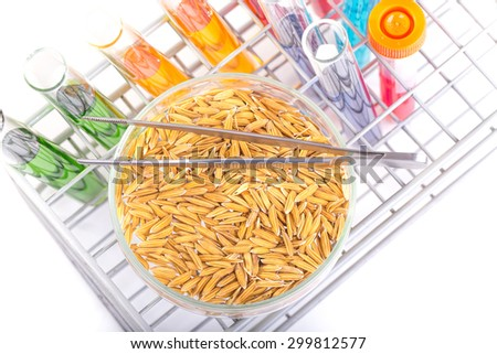 Scientists research the Rice bran oil in the lab. - stock photo