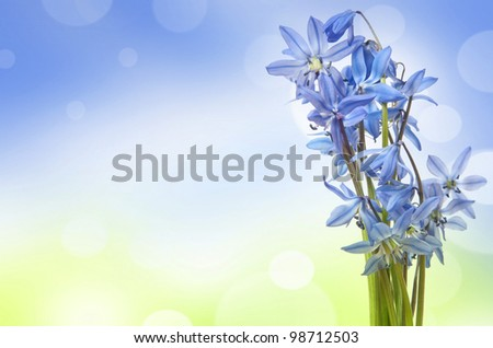 scilla  - blue spring flowers on a bokeh colors background - stock photo