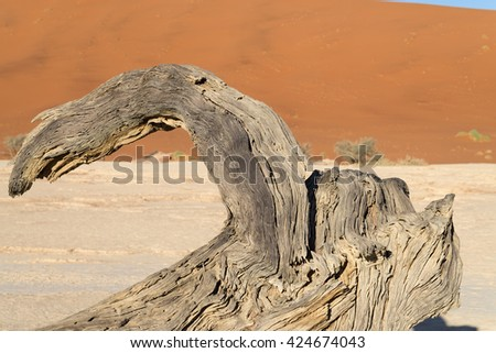 Scorched dead tree shortly after sunrise in Deadvlei, Sossusvlei, Namibia. Shallow depth of field. - stock photo