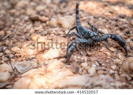 Scorpion in garden. - stock photo