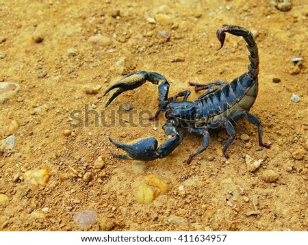 Scorpion on the ground - stock photo