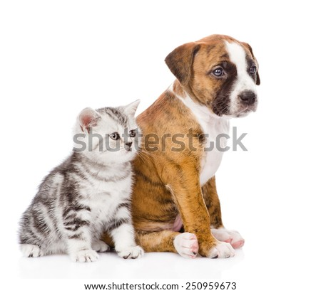Scottish kitten and puppy sitting in profile and looking away. isolated on white background - stock photo