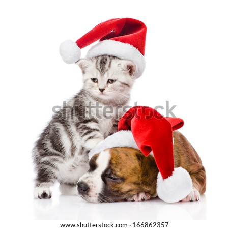 Scottish kitten and sleeping puppy with santa hat. isolated on white background - stock photo