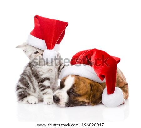 Scottish kitten and small puppy with santa hat. isolated on white background - stock photo