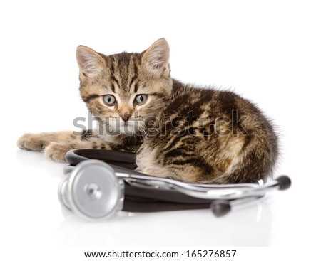 scottish kitten with a stethoscope. isolated on white background - stock photo