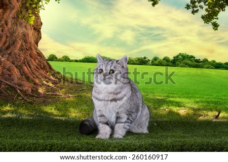 Scottish shorthair cat playing on a sunny summer day under a tree - stock photo