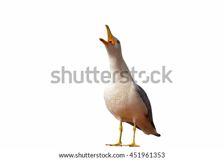 screaming seagull,close-up - stock photo