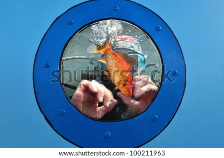Scuba diver is diving in a water tank with goldfish. - stock photo
