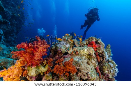 SCUBA diver near orange,red and yellow vividly colored corals - stock photo