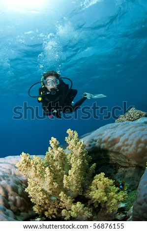 scuba diver on amazing coral reef - stock photo