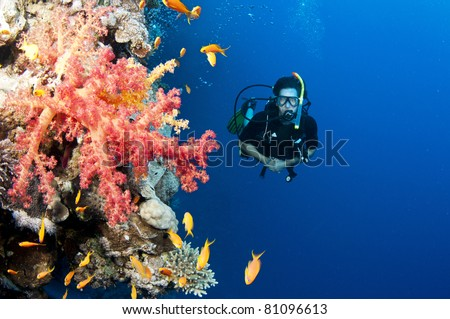 scuba diver swims on colorful coral reef - stock photo