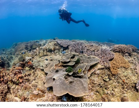 SCUBA diver swims over hard and soft corals on a colorful tropical reef - stock photo