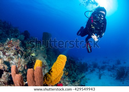 SCUBA Diver Swims Past a Spawning Sponge - stock photo