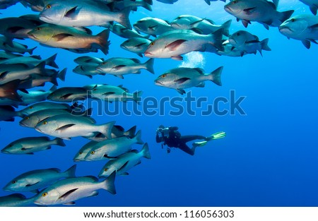 SCUBA Diver with a camera in the middle of a large school of fish - stock photo