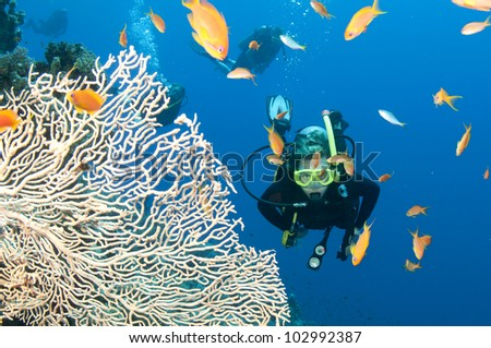 scuba diver with fish and coral on the great barrier reef - stock photo