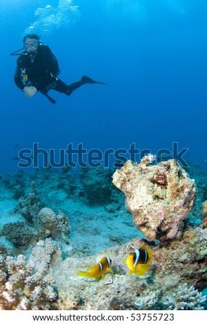 scuba diver with Nemo fish - stock photo