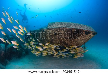 SCUBA divers and a shoal of snapper swim around a small underwater yacht wreck - stock photo