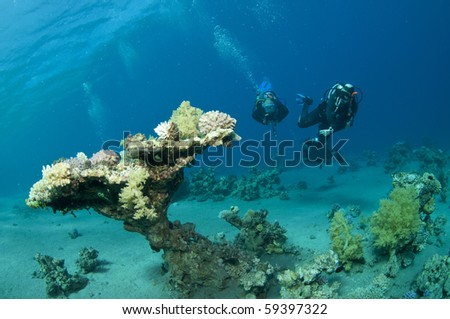 scuba divers and table coral - stock photo