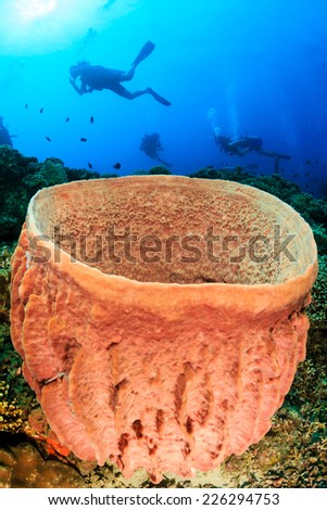 SCUBA divers approach a large barrel sponge on a tropical coral reef - stock photo