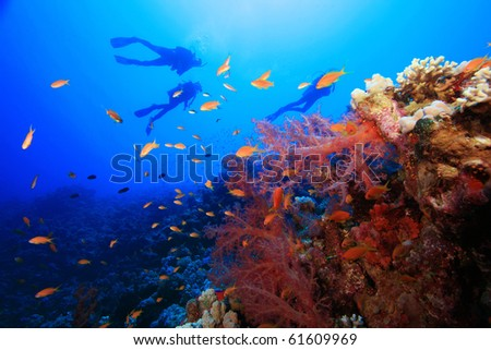 Scuba Divers explore a tropical coral reef - stock photo