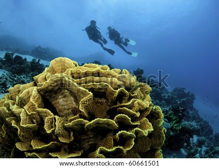 scuba divers on tropical reef - stock photo