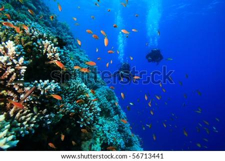 Scuba Divers swim along coral reef - stock photo