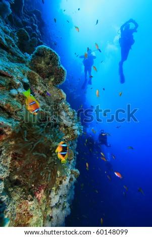 Scuba Divers swim past Anemone on reef wall - stock photo