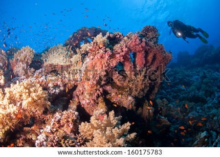 scuba diving at the wreck of the numidia - stock photo