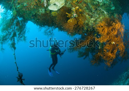 scuba diving diver kapoposang sulawesi indonesia underwater - stock photo