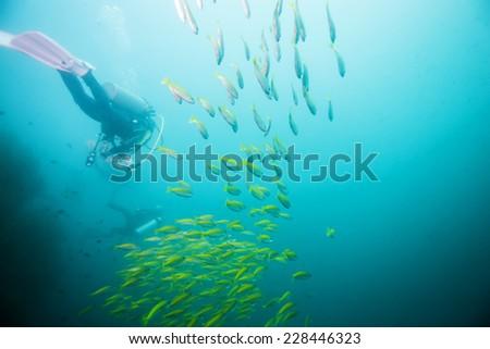 scuba diving in fish school - stock photo