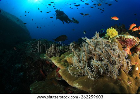 Scuba diving on coral reef - stock photo