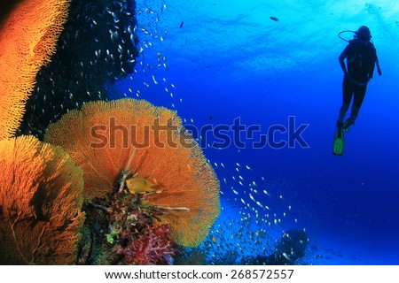 Scuba diving on coral reef in sea - stock photo