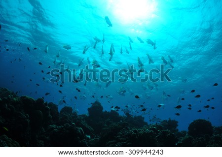 Scuba-diving with people - stock photo