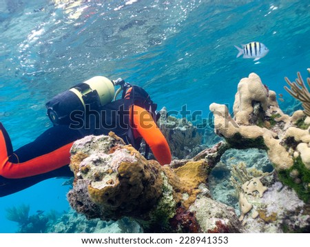 scubadiver undersea - stock photo