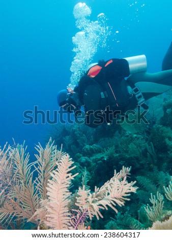 scubadiver undersea, Cuba - stock photo
