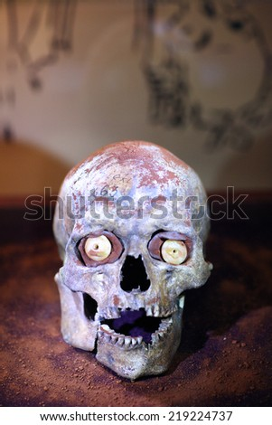 Scull of human for medicine study - stock photo