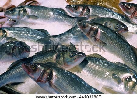 sea bass on display fish market - stock photo