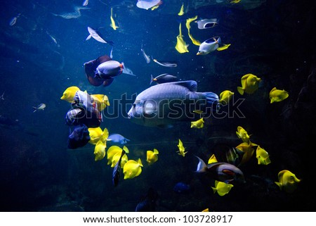 sea bed - stock photo