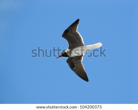 Sea bird on clean blue sky - stock photo