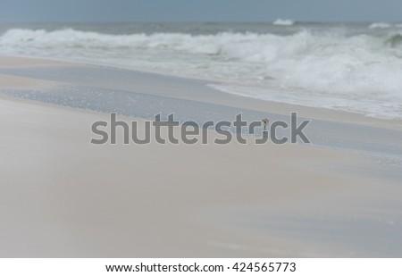 Sea Bird on the Coast In Pensacola Beach, Florida. - stock photo