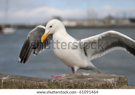 sea bird seagull - stock photo