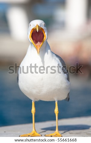 Sea bird seagull. nature closeup - stock photo