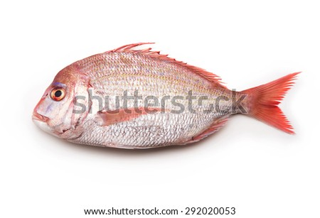 Sea breams ( sea breams / porgies or Sea bass Tai) isolated on white. Fish used for Sushi and othe Japanese dishes.. - stock photo