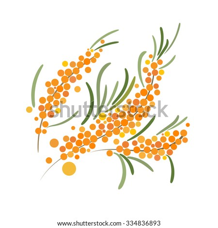 Sea Buckthorn Berries Branch on a White Background. Orange Berries on Branches Illustration.  - stock photo